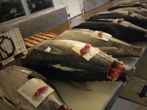 Tuna Grading