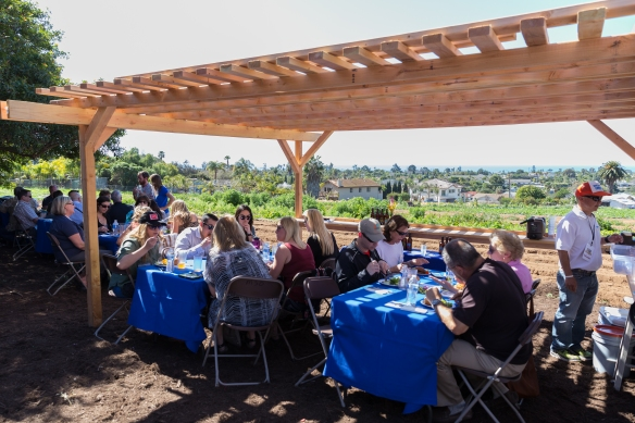 MSO_farm_to_table-18