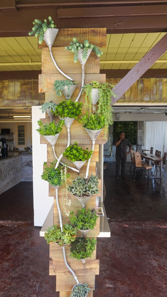 succulent-cafe-11