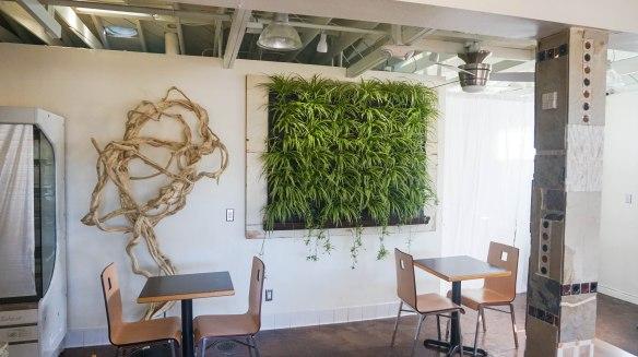 succulent-cafe-4