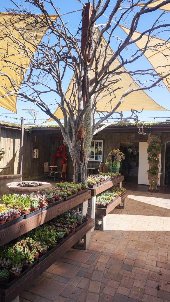 succulent-cafe-5