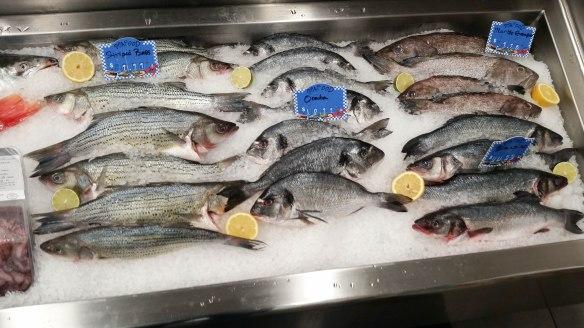 fish (1 of 1)