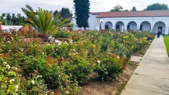 rose garden (1 of 1)